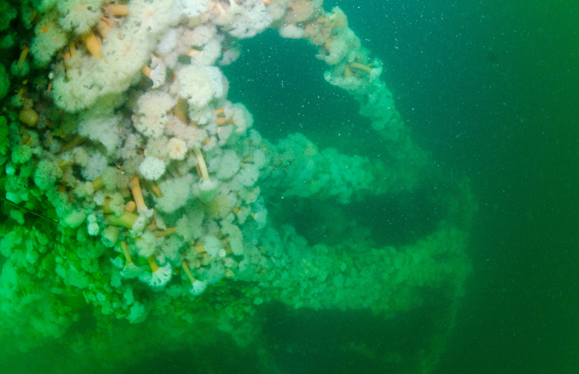 Looking down the Foremast of the Fairweather Five to the Bow covered in orange and white Plumose anemones - Metridium senile