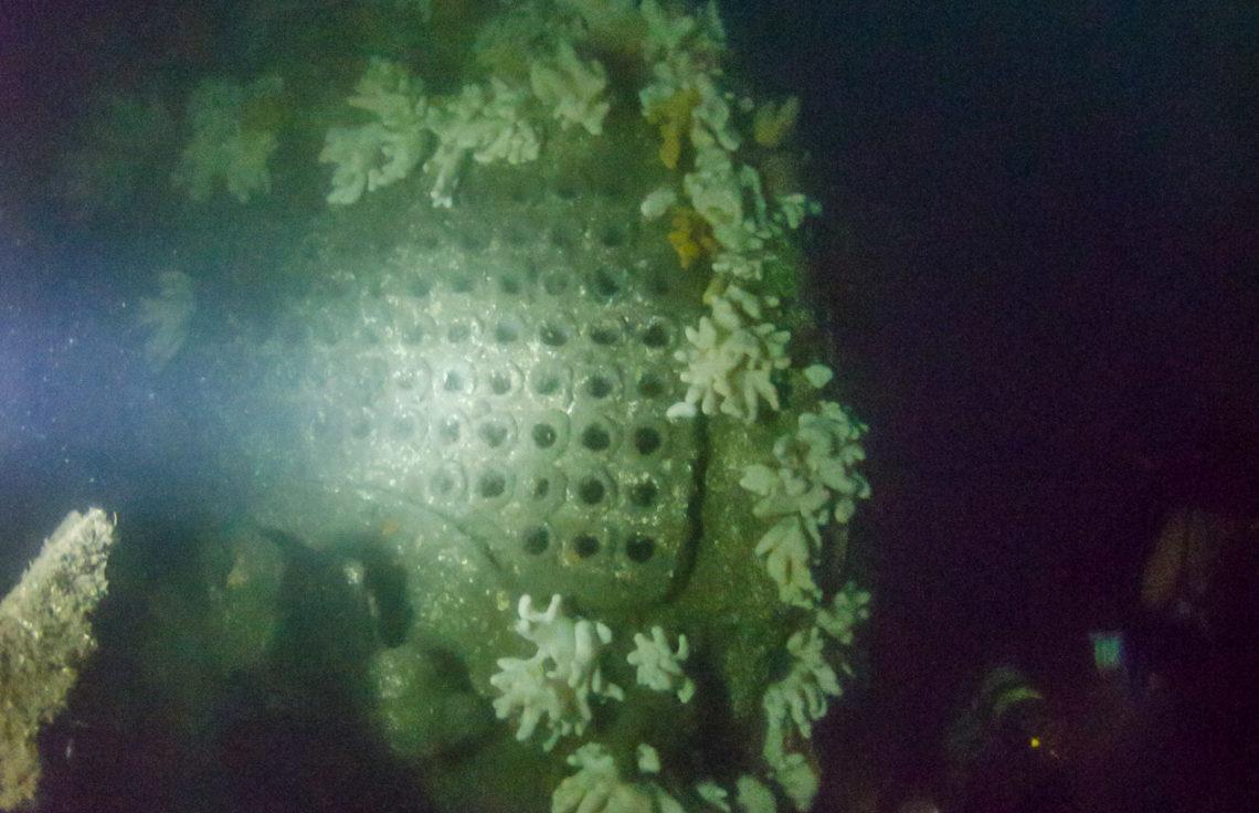 Boiler of the Primrose